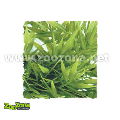 Терариумно растение Zoo-Med  Мадагаскарски бамбук