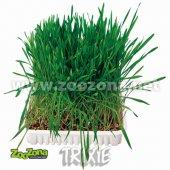 Трева за гризачи, 100 гр