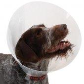 BUSTER transparent collar - Ветеринарна яка, прозрачна, 7.5см