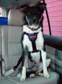 CLIX Нагръдник за куче за кола M - регулируем