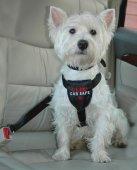 CLIX Нагръдник за куче за кола S - регулируем