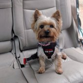 CLIX Нагръдник за куче за кола XS - регулируем