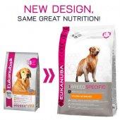 КУЧЕТА | Храна за кучета | Eukanuba Golden Retriever